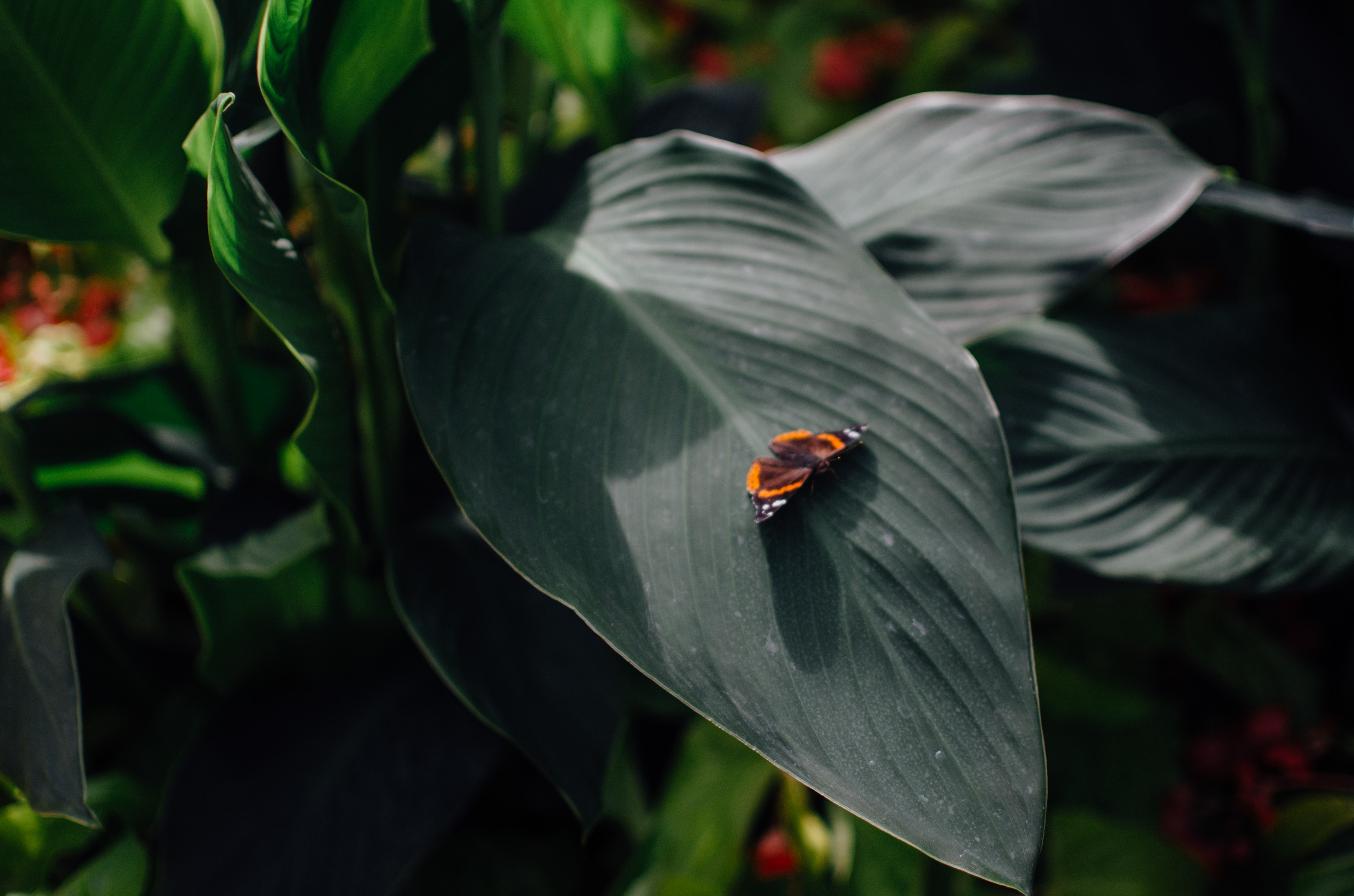 Butterfly at Longwood Gardens | byjessicayang.com